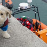 Marley getting ready to get on the boat