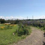 Georgeson Botanical Garden Foto