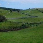 Irish fields on a glorious morning.