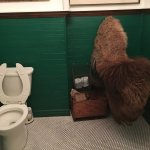 A mounted bison in the WC