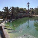 Photo de Krokodilfarm Animalia