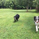 Off-leash adventures!