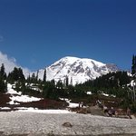 Towards Mount Rainier from the visitor centre