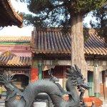 Dragon and Tree