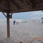 Coquina On The Beach Foto