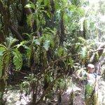 Garajonay Nationalpark Foto