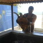 Kosgoda Sea Turtle Conservation Project Foto