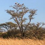 Foto de Esiweni Luxury Safari Lodge