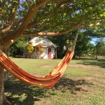 hammock under the fig tree