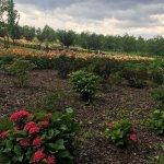Zdjęcie Arboretum w Wojsławicach