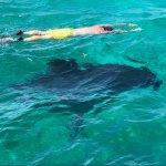 Swimming above a beautiful Sunfish - bucket list item!
