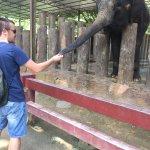 Feeding the elephant sugar canes