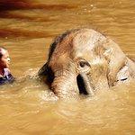 Photo of Kuala Gandah Elephant Sanctuary