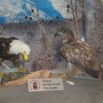 Display at Macaulay Salmon Hatchery