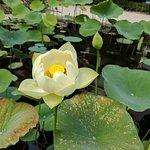 Botanical Garden (Hortus Botanicus)