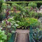 Potager garden, Ness Gardens