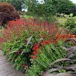 Crocosmia at Ness Gardens