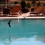 Birds drinking from hotel pool