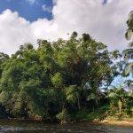 rio com vegetação típica da Mata  Atlântica