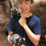 Feeding the marmosets