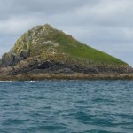 'Puffin Island' with many differnt species of birds