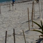 These are all turtle nests on the hotel beach! If you come here keep lights off at night.