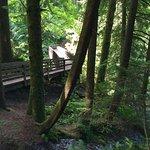 Photographs 7/9/17, Twin Falls Trail, Chris Munson