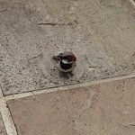 One of the local sparrows looking for crumbs