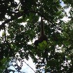 Photo de Punta Laguna Nature Reserve