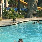 What do ducks say in the pool / Que opinan de los patos en la piscina o alberca. Julio 15 del 20