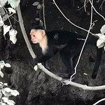 Monkeys on the Palo Verde tour.