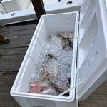 Great day fishing with Spear It Charters