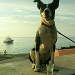 Rosie the Aqua Dog loving life@Sunset House!