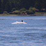 Foto de Puget Sound Express - Day Trips