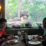 Eating breakfast with a view of the lions