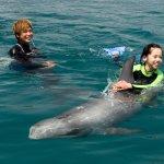 Foto de Muroto Dolphins Center