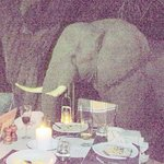 An elephant coming right up to our dinner table at Xudum