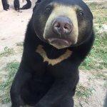 Photo of Phnom Tamao Wildlife Rescue Center