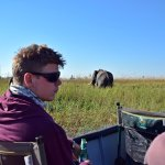 Viewing elephants from the boat