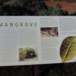 The fascinating Mangrove