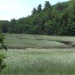 Lovely salt marsh on the Oven's Mouth property.