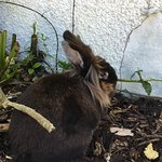 There is the addition of the 2 rabbits roaming free in the garden. Lovely if you have children.