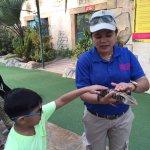 Reptiles interaction