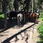 Horse's resting while we hike a bit