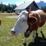 Photo of Agriturismo Malga Rundai