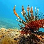 Extra Divers Aqaba Foto