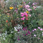 Wildflowers near the parking lot. Oct 5, 2016