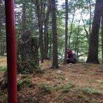Foto di Magic Forest
