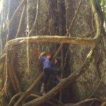observen Al Rey De la Amazonia Peruana, el  Arbol LUPUNA mas Conocida como CEIBA