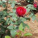 Lovely red flower
